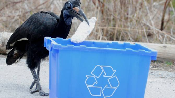 Recycle compost or throw out: app helps you dispose of anything