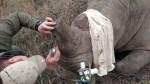 Tech firm Sigfox develops tiny tracker to help fight rhino poaching
