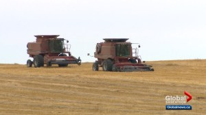 New numbers show Saskatchewan farms getting bigger, farmers getting older