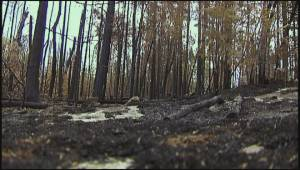 Caddy Lake businesses recovering after wildfires