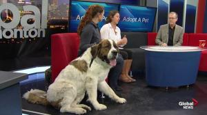 SCARS: Can you help Saint Bernard cross Jubba?