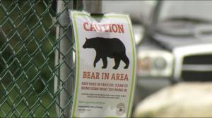 Parts of popular Coquitlam park closed to public because of bear