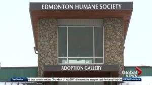 City to take over enforcement from Edmonton Humane Society