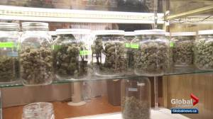 Calgary pot stores prepare for possibility of big crowds on Wednesday