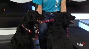 Edmonton Humane Society: Lola & Starla