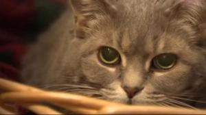 Nova Scotia bans declawing of domestic cats