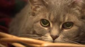Nova Scotia bans declawing of domestic cats