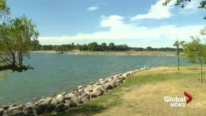 Dog days of summer: Lethbridge gearing up for heat wave