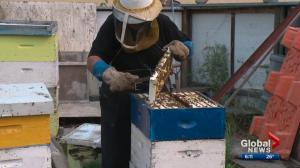 Large number of wasps this summer hurting Alberta business