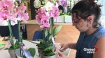Summit School's flower program blossoms into business