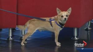 Pet of the Week: Chico (03:44)