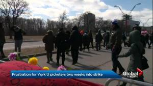 Alleged hit-and-run at York University picket line being investigated