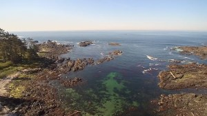 New trail draws tourists to Ucluelet
