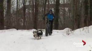 New Brunswick women create 'fat bikejoring' club