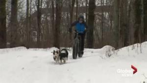 New Brunswick women create 'fat bikejoring' club