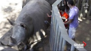 Two-year-old survives fall into Rhino enclosure at Florida zoo
