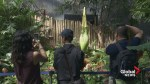 Rare corpse flower prepares to make a stink in Vancouver