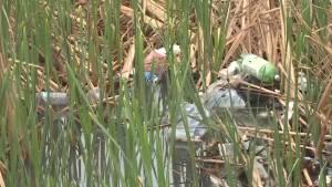 Kingston resident says garbage in inner city marsh is an embarrassment