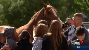 Horses help breed healthy reading practices