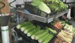 Big spike in celery prices as popularity of juice grows