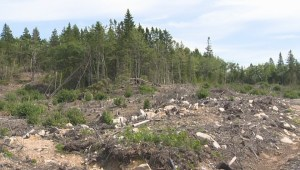 Nova Scotia forestry industry defends clear cutting