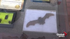 Bat-friendly Peachland given award for conservation efforts