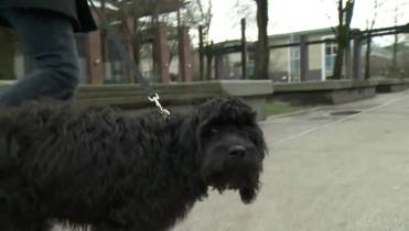 They're my babies': Renters forced to give up their pets over lack