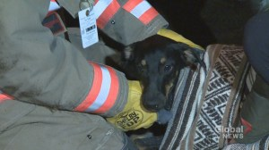 Firefighters rescue scared dog trapped underneath SUV engine