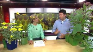 Saving bees on National Planting Week