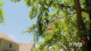 Cleanup continues after powerful storm sweeps through southern Alberta