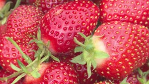 Nova Scotia strawberry farmers say they're having one of the worst seasons in memory