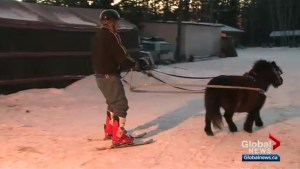 Alberta video of winter sport involving horses and skis goes viral