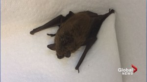 Sussex area man receiving rabies treatment after bat bite