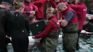 Update on death of Aurora the beluga whale