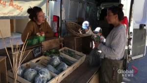 Peterborough Downtown Farmers' Market opens for 2019 season