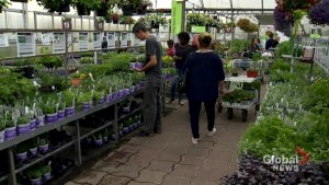 Long weekend kicks off gardening season in Montreal
