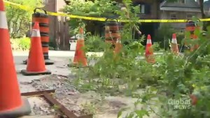 Tomato garden planted in sinkhole that has been plaguing residents