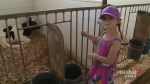 Farm opens its barn doors and pastures for Father's Day fundraiser