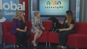 Adopt a Pet: Sage looking for a home