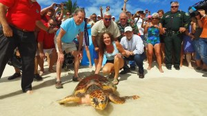 Sen. Marco Rubio helps release rehabbed sea turtle in Florida Keys