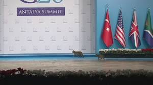 World leaders gathered for G20 upstaged by stray cats in Turkey