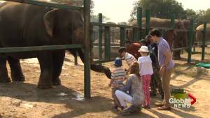 PM Trudeau and family visit elephant rescue sanctuary north of Agra