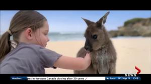 AMA Travel: Explore Australia this winter