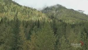 Highway view of Revelstoke plane crash site
