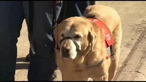 """He saved my life."" We meet local service dogs and hear why they are so important"