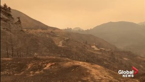 'It's snowing ash': first responder surveys scorched landscape near Malibu