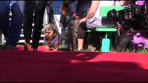 'Scamp the Tramp' crowned world's ugliest dog