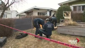 Cats trapped in Edmonton sinkhole prompts firefighter rescue