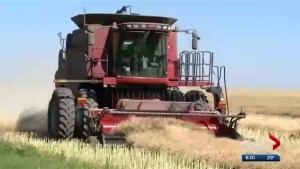 Saskatchewan family farmers worry proposed federal tax changes