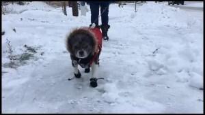 First snowfall of the season hits Peterborough